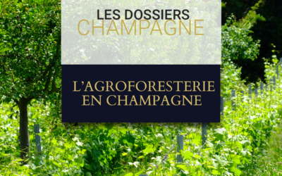 L'agroforesterie en Champagne : mode ou tendance de fond ?